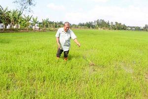 Thu nhập cao từ tổ hợp tác sản xuất lúa giống