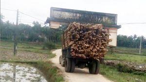 Công nông chở gỗ 'cõng' cả cổng làng…đi chơi