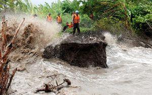 Cà Mau mỗi năm mất hơn 800 ha đất do sạt lở