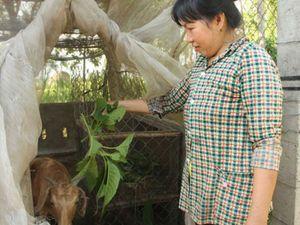 Tiếp sức cho người nghèo ở Long An