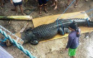 Bẫy được cá sấu khổng lồ nghi ăn thịt một ngư dân