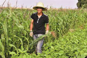 Tiến sĩ, thạc sĩ Trung Quốc bỏ thành phố về nông thôn làm nông nghiệp