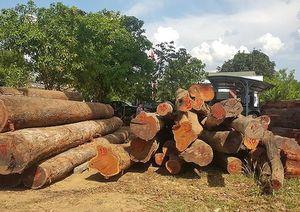 Bị 'sờ gáy' vì liên quan đến trùm gỗ Phượng 'râu', một giám đốc bỏ trốn