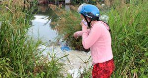 Dân 'phát điên' vì cá chết bị vứt bừa bãi gây ô nhiễm môi trường