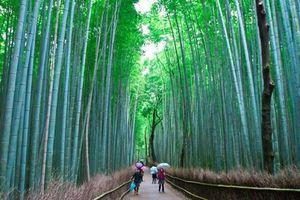 Đi xuyên rừng trúc tới không gian cổ xưa ảo huyền của Kyoto