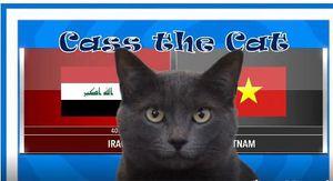 'Mèo tiên tri' dự đoán kết quả trận Việt Nam vs Iraq tại Asian Cup 2019