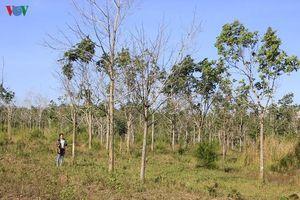 Doanh nghiệp chỉ quan tâm lợi ích, trốn tránh trồng rừng thay thế