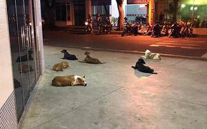 6 chú chó chạy theo xe chở chủ nhân đi cấp cứu và kiên nhẫn đợi bên ngoài bệnh viện suốt 24 tiếng