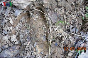 Phát hiện dấu vết nghi là bò tót ở Khu bảo tồn Bắc Hướng Hóa