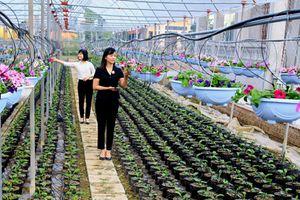 Thành phố Ninh Bình: Kết quả sau 2 năm ứng dụng công nghệ cao vào sản xuất rau, hoa