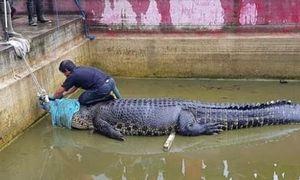 Người phụ nữ Indonesia bị con cá sấu nặng 700kg ăn thịt