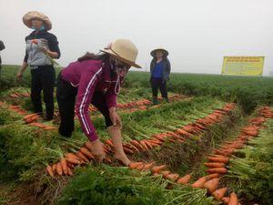 Bộ trưởng NN&PTNT thích thú thưởng thức cà rốt sạch ngay tại ruộng