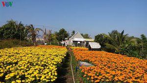 Người dân làng hoa kiểng Cái Mơn phấn khởi vì được mùa, được giá