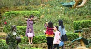 Du xuân ở vườn hồng lớn nhất Việt Nam