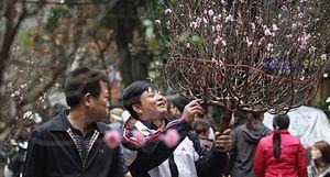Hồn xuân nơi chợ hoa phố cổ