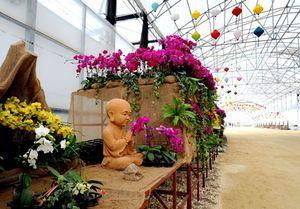 Lễ hội hoa xuân tại Thung lũng hoa Bái Đính