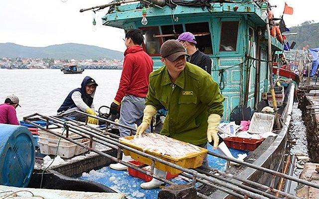 Nhà nông xuống đồng, ngư dân trúng đậm trong chuyến biển đầu năm