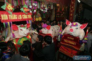 Độc đáo Hội rước 'ông lợn' ở La Phù