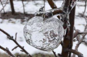Lạ kỳ những quả 'táo ma' bất ngờ xuất hiện trong đợt lạnh kỷ lục ở Mỹ