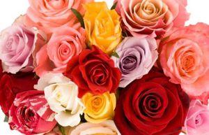 Những điều thú vị về ngày lễ Valentine để trọn vẹn 365 ngày nói lời yêu thương