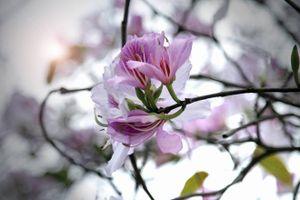 Những điểm đến ngắm hoa nở tuyệt đẹp trong tháng 3