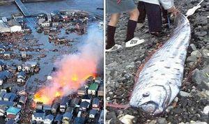 Thực hư về loài cá có khả năng dự báo động đất tại Nhật Bản