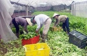 Triển khai đào tạo nghề nông nghiệp cho lao động nông thôn năm 2019