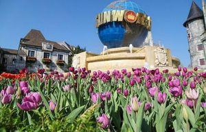 Mê mải giữa 'đồi' tulip ngạt ngào hương sắc tại Bà Nà