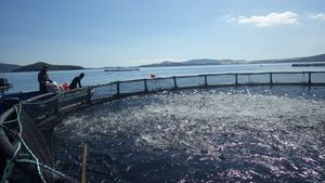 Nuôi cá lồng bè trên sông Chà Và áp dụng công nghệ mới của Na Uy