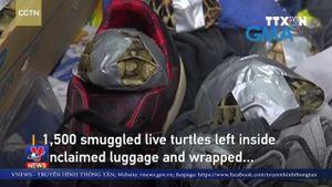 Phát hiện hơn 1.500 con rùa tại sân bay Philippines
