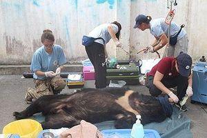 Giải cứu 3 cá thể gấu nuôi nhốt tại Đồng Nai