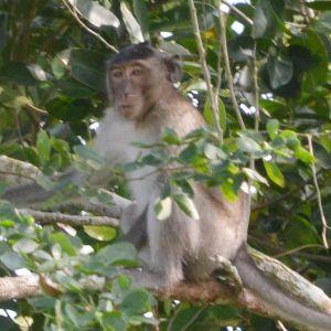 Sóc Trăng: Thêm hai bé trai bị khỉ hoang cắn cháy máu