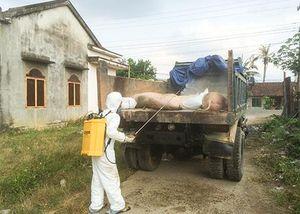 Khánh Vĩnh: Xuất hiện bệnh lở mồm long móng trên đàn heo