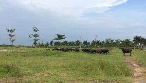 Thủ tướng 'lệnh' kiểm tra 2.000ha đất dự án bỏ hoang ở Mê Linh