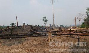 Rừng biên giới liên tục bị phá: Khởi tố vụ án hình sự