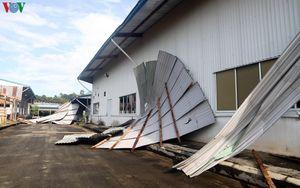 Khắc phục hậu quả lốc xoáy tàn phá nặng nề ở Lâm Đồng