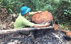Vụ phá rừng lim ở Quảng Bình: Cách chức Trạm trưởng trạm bảo vệ rừng