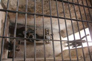Kỳ 2: Nữ cựu tù nặng lòng với Côn Đảo