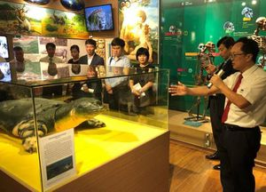 Trưng bày bản sao tiêu bản mẫu Rùa hồ Gươm