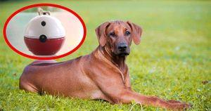 Bị chó cắn, nam sinh chế tạo thiết bị đuổi chó cực kỳ hiệu quả