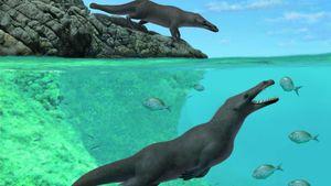 Phát hiện loài cá voi 4 chân, leo lên bờ sinh sản