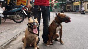 Vụ chó cắn chết người ở Hưng Yên: Cần xem xét các yếu tố về Hình sự