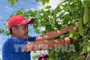 U Minh Thượng xây dựng mô hình trồng rau bản địa sạch