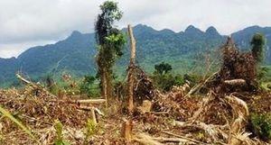 Rừng ở Vườn Quốc gia Phong Nha Kẻ Bàng tiếp tục 'chảy máu'