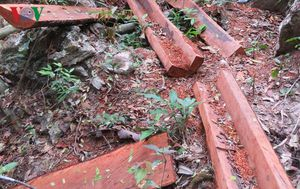 Khởi tố vụ án phá rừng ở Phong Nha - Kẻ Bàng