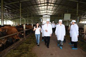 Sữa Cô Gái Hà Lan vinh dự đón tiếp Thứ trưởng Hà Lan đến thăm dự án phát triển vùng chăn nuôi bò sữa bền vững tại tỉnh Hà Nam