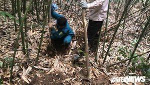 Kỳ thú chuyện săn lùng loài chuột khổng lồ trong rừng tây Yên Tử