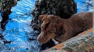Chú chó bơi ra giàn khoan dầu cách bờ biển 220 km được cứu sống