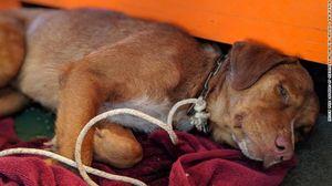 Giải cứu chú chó bơi lạc 220km giữa biển