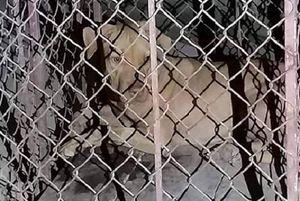 Hà Tĩnh: Lại thêm một vụ chó tấn công người rùng rợn